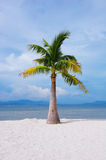 Beautiful beach with a palm. Blue sky with white cloud Royalty Free Stock Image