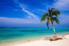 Beautiful beach with palm with blue sky Stock Photo