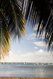 Beautiful Beach with Palm frame Stock Photography
