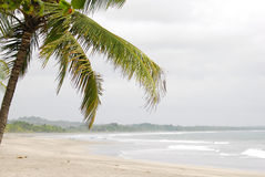 Beautiful beach and palm tree. In Costa Rica Royalty Free Stock Photo