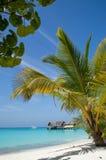 Beautiful Beach with Palm Tree Stock Photo