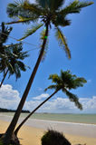 Beautiful beach with palm tree and blue sky Royalty Free Stock Photography