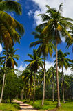 Beautiful beach with palm tree and blue sky Stock Image
