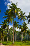 Beautiful beach with palm tree and blue sky Royalty Free Stock Image