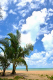 Beautiful beach with palm tree and blue sky Royalty Free Stock Photos