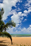 Beautiful beach with palm tree and blue sky Stock Photography