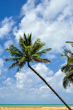 Beautiful beach with palm tree and blue sky Stock Photos