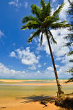 Beautiful beach with palm tree and blue sky Royalty Free Stock Images