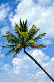 Beautiful beach with palm tree and blue sky Stock Photo