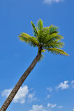 Beautiful beach with palm tree and blue sky Stock Images