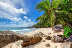 Beautiful beach with palm tree and cliffs at Seychelles. Stock Photography