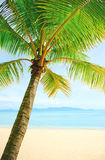 Beautiful beach with palm tree over the sand Stock Photos