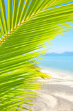 Beautiful beach with palm tree over the sand Stock Photography