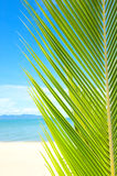 Beautiful beach with palm tree over the sand. Beautiful tropical beach with palm tree and sand Stock Photos