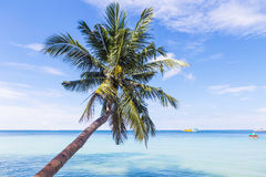 Beautiful beach with palm tree over the sea. Thailand, Koh Tao Royalty Free Stock Images