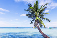 Beautiful beach with palm tree over the sea. Thailand, Koh Tao Stock Photo