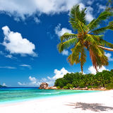 Beautiful beach with palm tree at Seychelles Stock Image