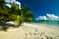 Beautiful beach with palm tree at Seychelles Royalty Free Stock Photos
