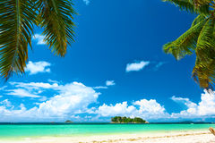 Beautiful beach with palm tree at Seychelles Royalty Free Stock Photography