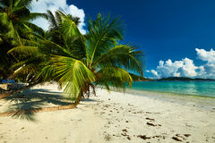 Beautiful beach with palm tree at Seychelles Royalty Free Stock Images