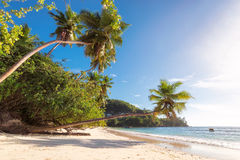 Beautiful beach with palm tree at Seychelles. Royalty Free Stock Photos