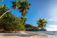 Beautiful beach with palm tree at Seychelles. Royalty Free Stock Photo