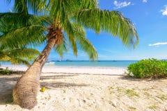 Beautiful beach with palm tree Royalty Free Stock Photo