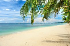 Beautiful beach with palm trees Stock Image