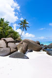 Beautiful beach with palm trees. At the seychelles Stock Photo