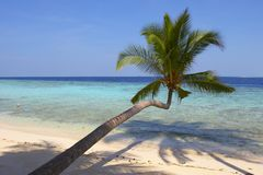 BEAUTIFUL BEACH WITH PALM TREES. BEAUTIFUL BEACH WITH PALM TREE IN INDIAN OCEAN, MALDIVE ISLAND, FILITEYO Royalty Free Stock Photography