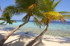 BEAUTIFUL BEACH WITH PALM TREES. BEAUTIFUL BEACH WITH PALM TREE IN INDIAN OCEAN, MALDIVE ISLAND, FILITEYO stock photos