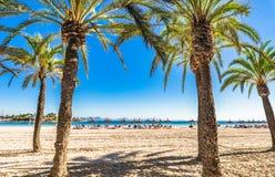 Palm trees at the sand beach of Alcudia Majorca Spain. Beautiful beach with palm trees of Alcudia on Majorca island, Spain Mediterranean Sea, Balearic Islands Stock Images