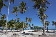 Beautiful Beach with Palm Trees. Beautiful sandy beach with palm trees Royalty Free Stock Photography