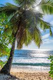 Beautiful beach with palm trees. And tropical sea. Summer vacation travel holiday background concept Royalty Free Stock Photos