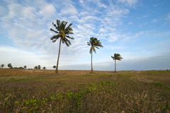 Beautiful beach with palms Royalty Free Stock Photography