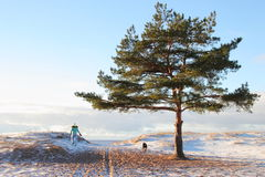 Beautiful beach. With pine tree .Girl with dog Royalty Free Stock Photos