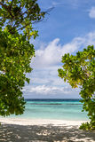 A beautiful beach with plants Stock Image