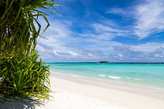 A beautiful beach with plants Royalty Free Stock Photography
