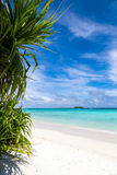 A beautiful beach with plants Royalty Free Stock Images