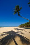 Beautiful beach at Praia da Pipa Brazil Royalty Free Stock Photography