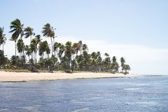 Praia do Forte in Bahia, Brazil. Beautiful beach of Praia do Forte close to Salvador in Bahia, Brazil stock image