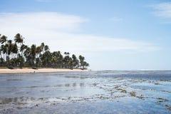 Praia do Forte in Bahia, Brazil stock image