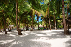 Beautiful beach - Saona island, Dominican Republic Stock Photography