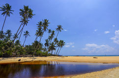 Beautiful beach scenic with coconut tree anf blue sky Stock Photography