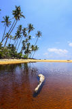 Beautiful beach scenic with coconut tree anf blue sky Stock Images