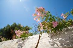 Beautiful flowers  on Spetses Island  Greece - greek Idyll. Beautiful beach on Spetses Island  Greece - greek Idyll royalty free stock images