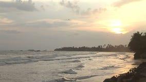 Beautiful beach in Sri Lanka at sunset stock video footage