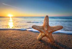 Beautiful beach with sunrise background. Focus on sea starfish stock photos