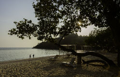 Beautiful beach and tree in the evening Royalty Free Stock Photography