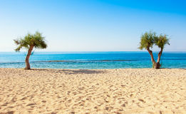 Beautiful beach with trees and tropical sea Stock Photography